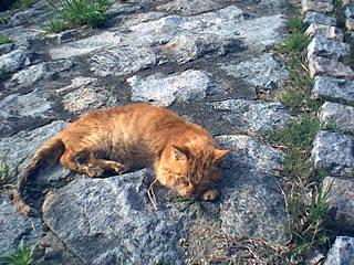 le chat dormi