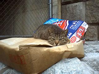 le chat comme objet