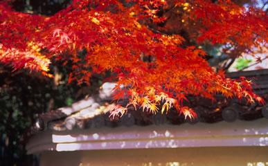 des feuilles rouges tombaient sur un mur