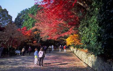 on visite des feuilles rouges