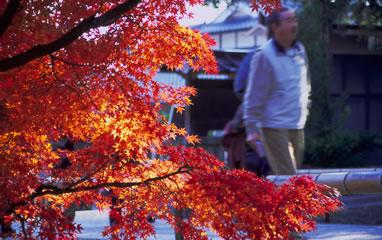 des feuilles rouges, çà et là